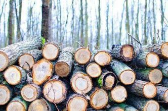 Lumber, comes from the only natural renewable resource, our forests.